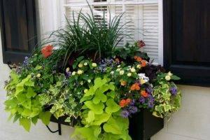 GardenEleganceWindowBox