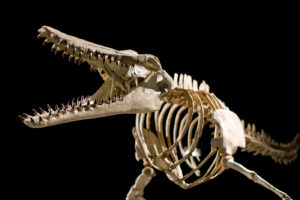 Prehistoric Giants of Lowcountry